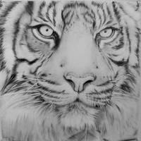 Tiger Drawing by darrenOhhh