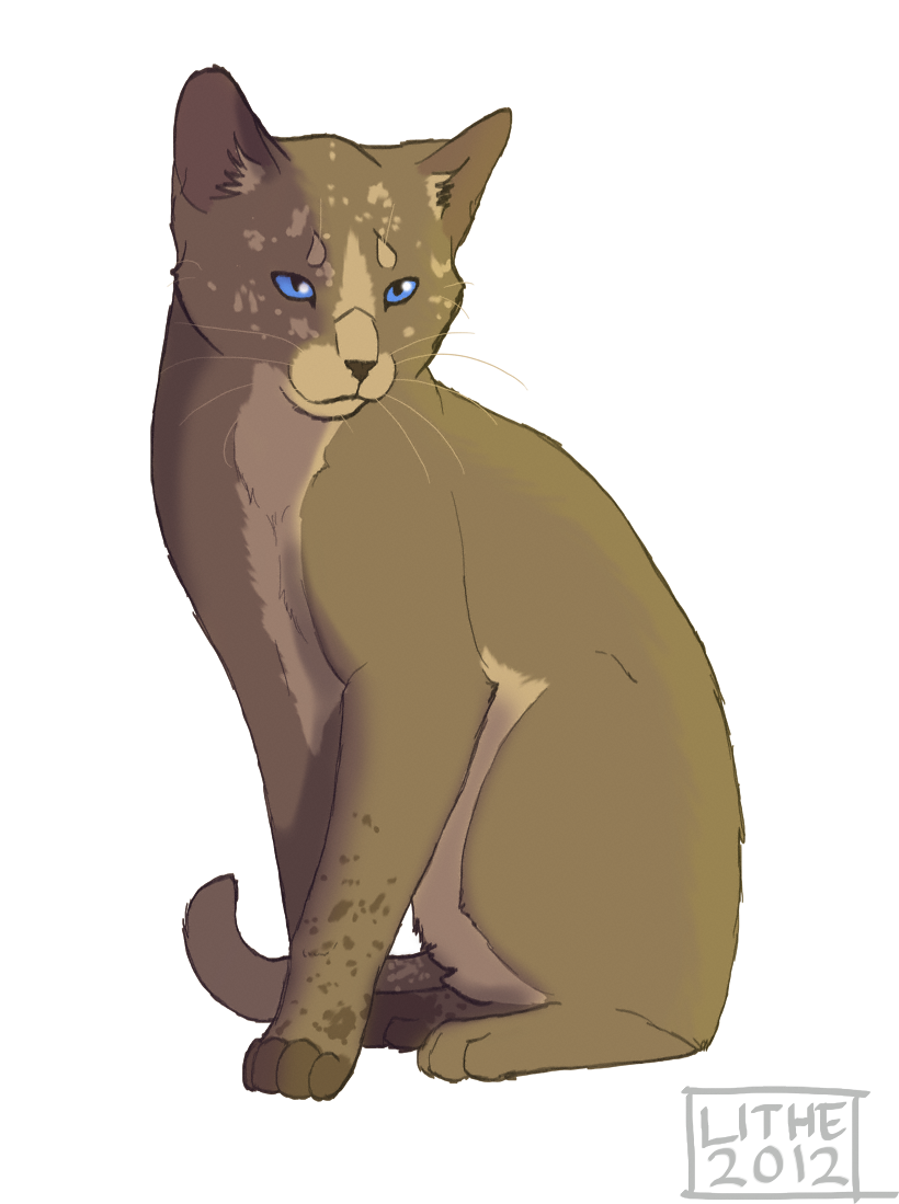 Mousewhisker  Warrior Cat Wiki  FANDOM powered by Wikia