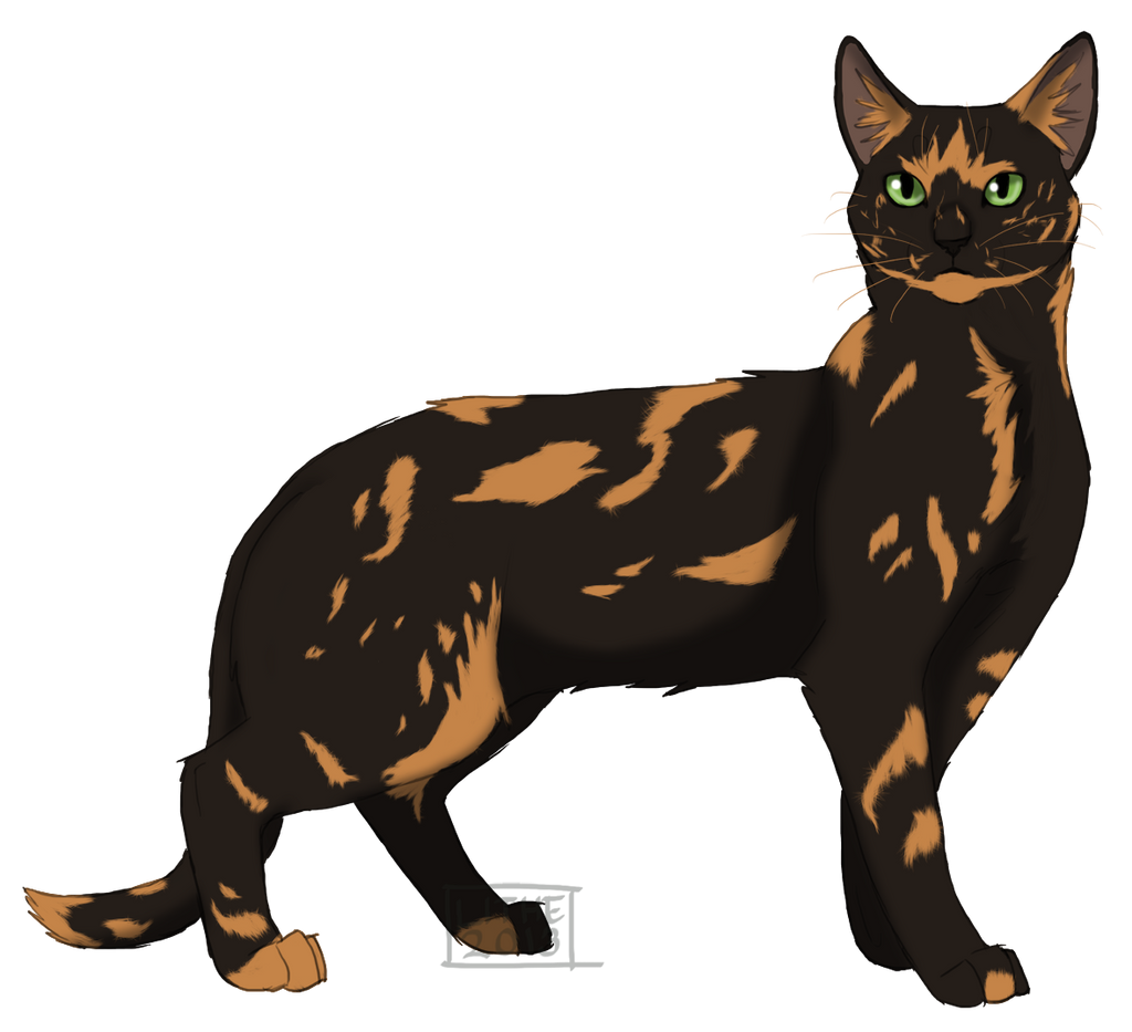 Warrior Cats Dawn Of The Clans Fanart: Turtle Tail By Lithestep On DeviantArt