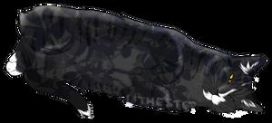 Geckopaw
