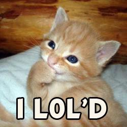 Lol kitten by DiverseDeviant