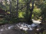 Alaska Stock, Mchugh Creek