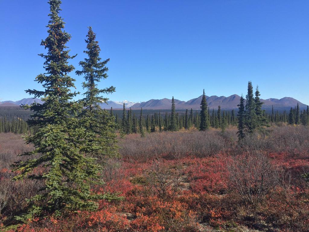 Alaska Stock, Denali by audreystocks