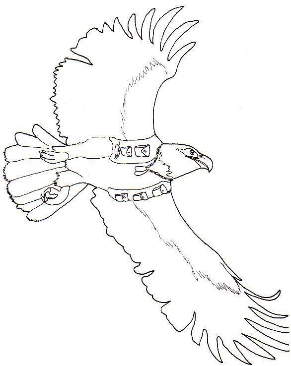 Line Art Eagle : Jack oneill the eagle lineart by blackdragon on deviantart