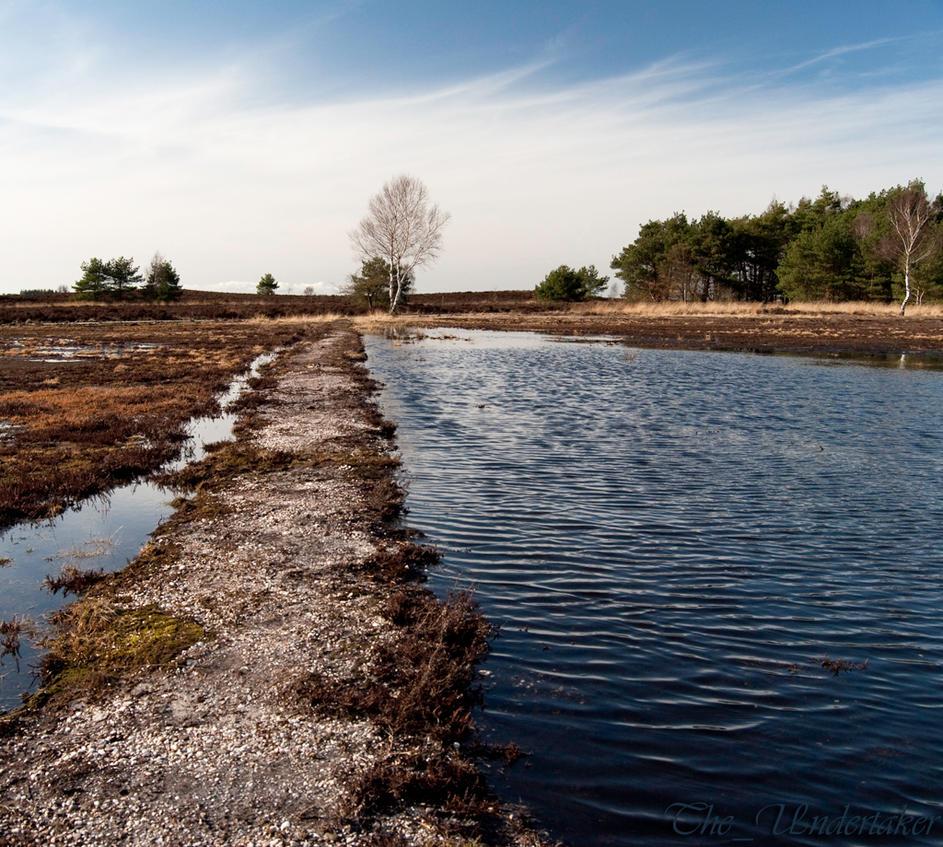 Heathlands after winter by FlyingMantaRay