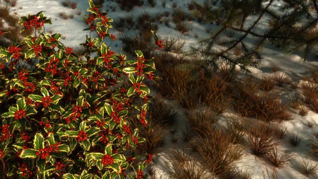 Holly winter