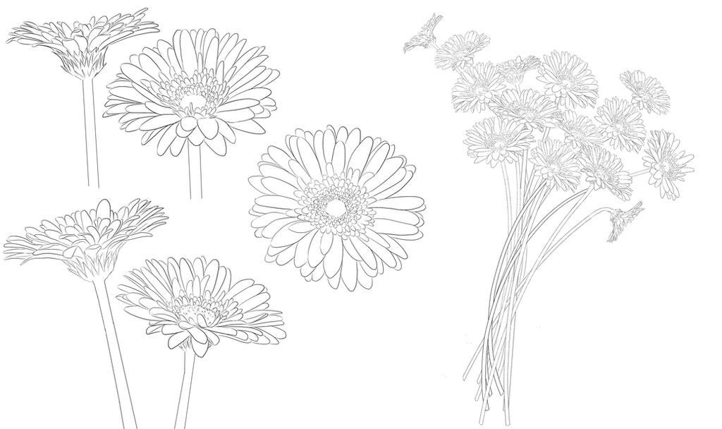 How To Draw Gerbera