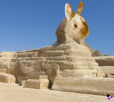 [Image: sphinx_bunny_by_lilac_ladybird.jpg]