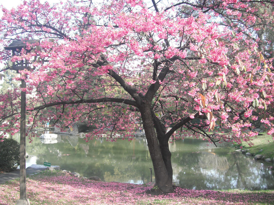 Jardin japones 1 by marinati09 on deviantart for Jardin japones