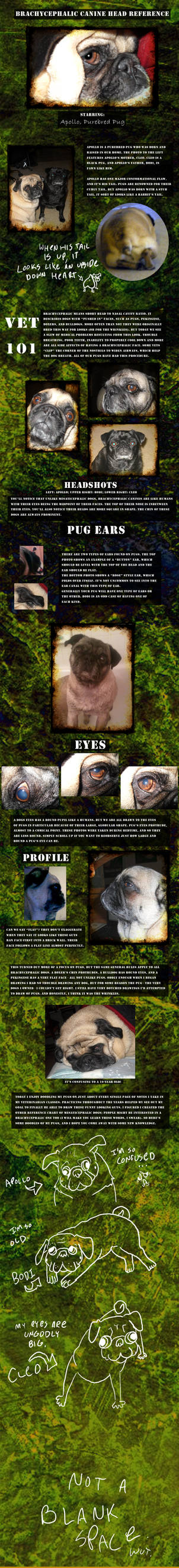 Flat-Faced Dog Head Reference by Reitom-Wolf