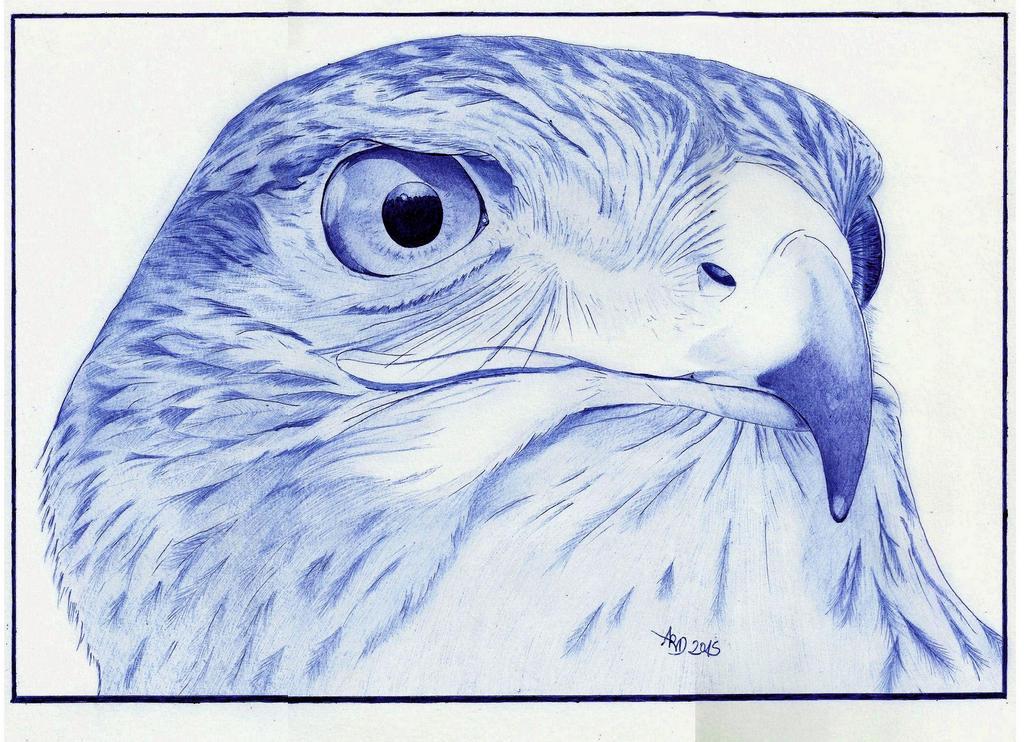 Ballpoint goshawk (only BIC blue ) by Angeliqueperrin