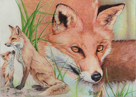 Red fox, ballpoint pen by Angeliqueperrin