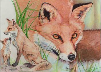 Red fox, ballpoint pen