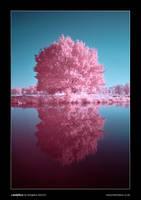 Candyfloss by henroben