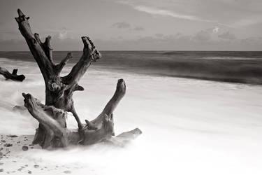 The Sea Tree by henroben