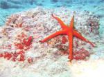 Sea stars by buttervlieg