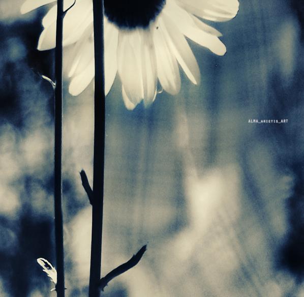 .your last spring. by AlmAArietis