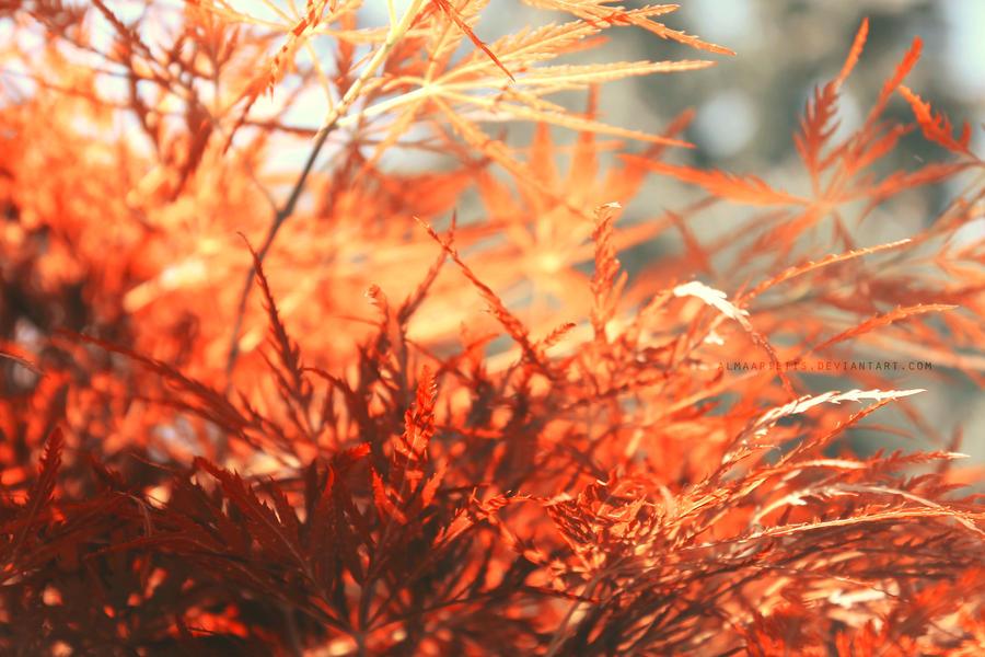 nature's inferno. by AlmAArietis