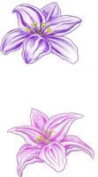 Flowers New Tattoo Design