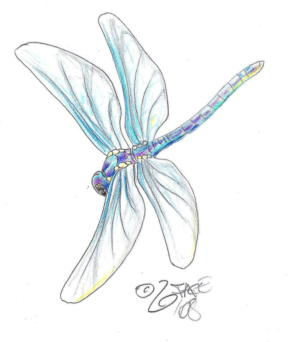 Dragonfly Tattoo Design