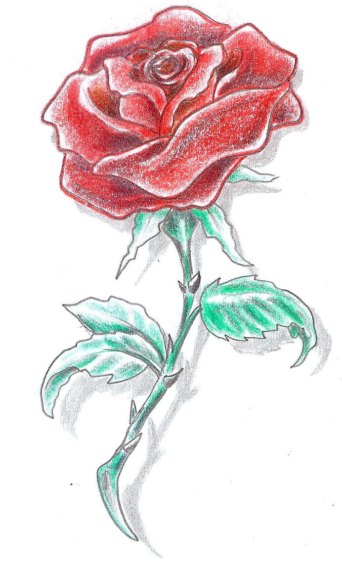 Tattoo Design Rose color - flower tattoo