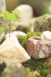 Little nature stock 1