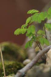 Little nature stock 2