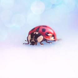 Ladybug by Chansie