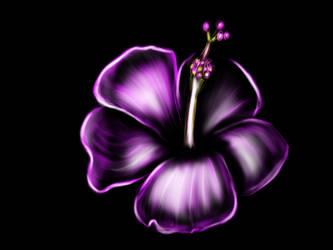 Hibiscus by GitlerHobostein