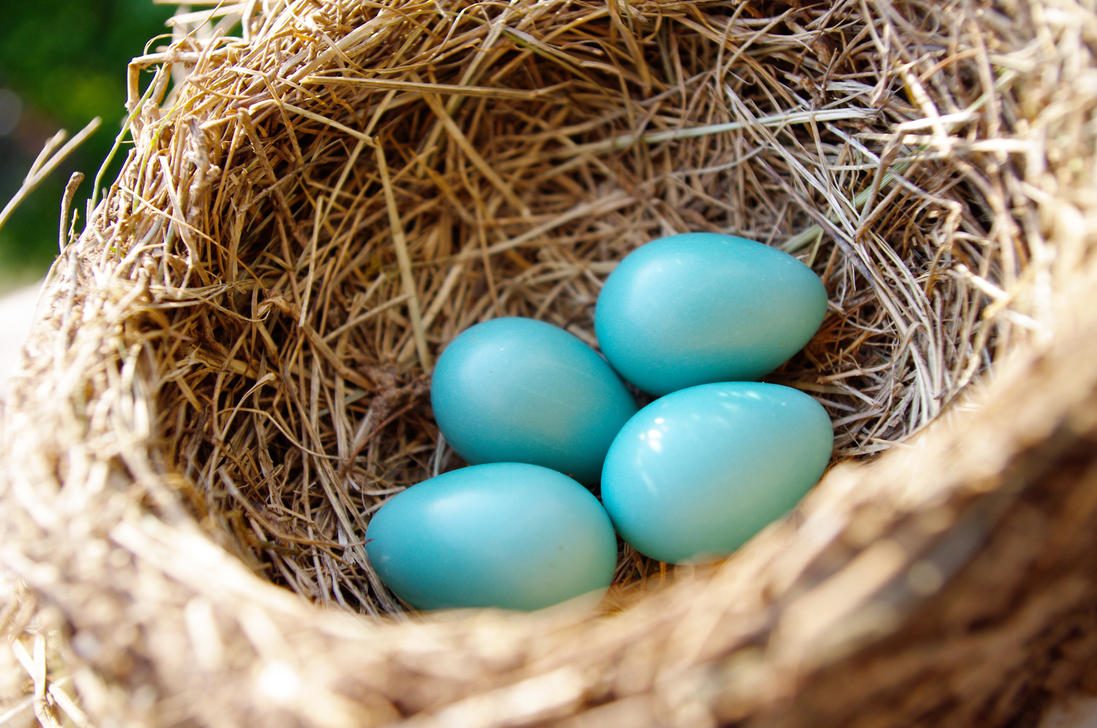 Natural Color Of Eggs