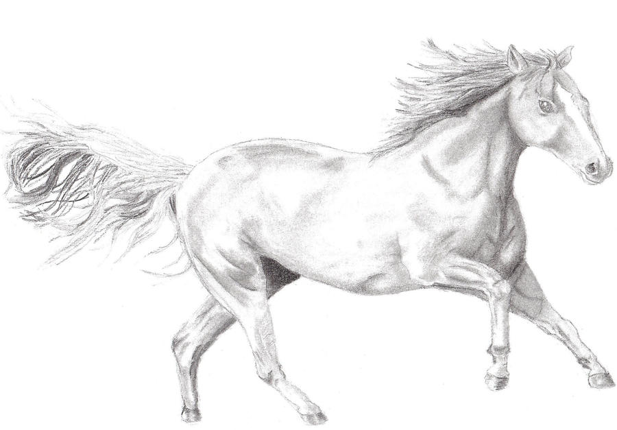Running horse drawing easy - photo#20