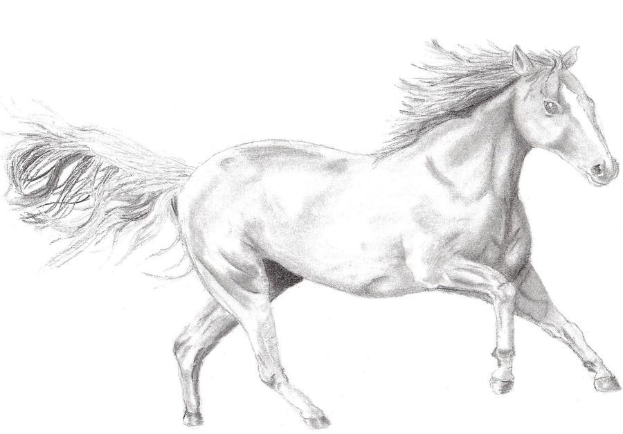 Running Horse sketch by Una9641 on DeviantArt