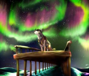 Northern Lights - Chief