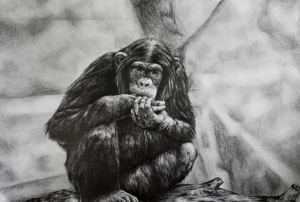 Chimpanzee by ADHD-art