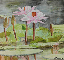 Water lilies in watercolours by purple-whirlpool