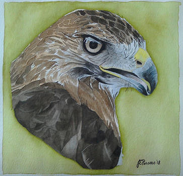 Red tail hawk by purple-whirlpool