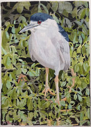Noddy the night heron by purple-whirlpool