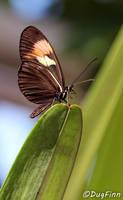 Butterfly 1 by DugFinn