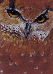 Owl ACEO by Leftblind