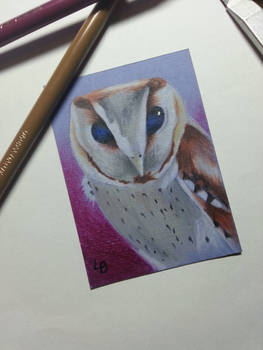Southern bay owl ACEO