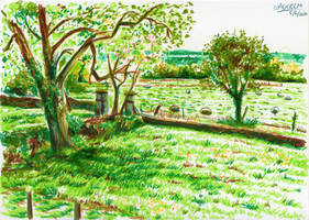 Countryside Grassy Yard