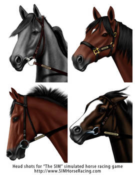 Head shots of horses -Group 46