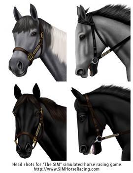 Head shots of horses-Group 108