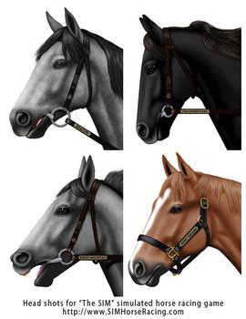 Head shots of horses-Group 109