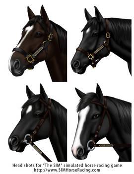 Head shots of horses-Group 113