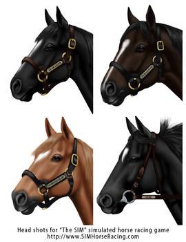 Head shots of horses-Group 115
