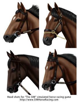 Head shots of horses-Group 118