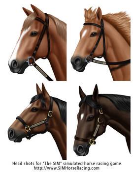 Head shots of horses-Group 119