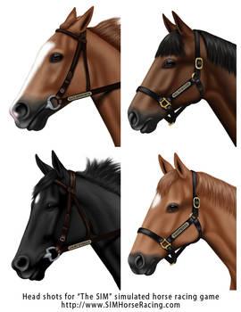 Head shots of horses-Group 122