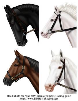 Head shots of horses-Group 124